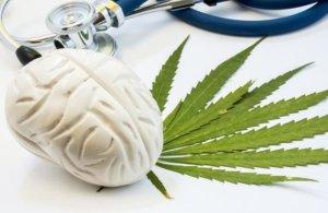 Marijuana Online - Spopolano i Web Store di Erba Legale.